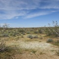 Wide open spaces at Desert Tortoise Research Natural Area.- Desert Tortoise Natural Area