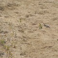 Keep your eyes peeled for lizards scurrying across the trails.- Desert Tortoise Natural Area