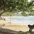 Rope swing at Kalae'O'iO Beach Park.- Kalae'O'iO Beach Park