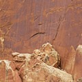 There are many big horn sheep petroglyphs here.- The Fruita Petroglyphs