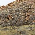 Nearby cliffs.- The Fruita Petroglyphs