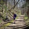 Exploring the Big Creek Trail. - Big Creek Trail to Mouse Creek Falls