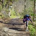 Wildflower identification time along the Big Creek Trail. - Big Creek Trail to Mouse Creek Falls