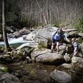 Exploring Big Creek. - Big Creek Trail to Mouse Creek Falls