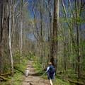 Hiking Big Creek Trail.- Big Creek Trail to Mouse Creek Falls
