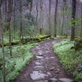 In the spring every year, a portion of Porters Creek Trail becomes filled with thousands of fringed phacelias.- Porters Creek Trail to Fern Branch Falls