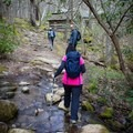 Exploring a short side trail to a historic farm site.- Porters Creek Trail to Fern Branch Falls