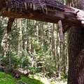 One of the downed trees along the early section of the trail.- Crescent Mountain