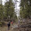Short walk through forested trail.- Coyote Creek Trail