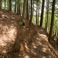 The trail is thick with pine needles.- Stone Valley Recreation Area