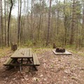 Campsites just outside the picnic area are equipped with picnic tables and fire pits.- Greenwood Creek Picnic Area