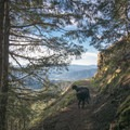 The hike to Tire Mountain is a great hike for dog owners.- Tire Mountain