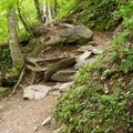 The trail is rocky and full of roots.- Sterling Pond