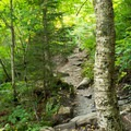 Typical trail scenery.- Sterling Pond