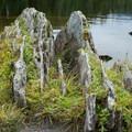 Interesting geology at Sterling Pond.- Sterling Pond