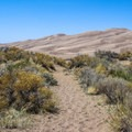 One of the many short sand paths leading to Medano Creek and the dune field.- High Dune Loop