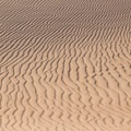 The varying lines and shapes that you will find within the dunes is endless.- High Dune Loop