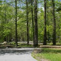 Cades Cove Campground in the spring. - Cades Cove Campground