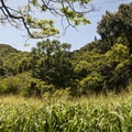 The trail goes up the valley and is flanked on either side by ridges.- Kamananui Valley Road