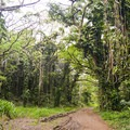 The road follows through primary and secondary growth forests.- Kamananui Valley Road