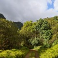 The forest surrounding the road is thick and lush.- Kamananui Valley Road