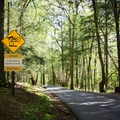 Biking the cove is one of the best ways to experience all that the Heart of the Smokies has to offer, but ride safely! - Cades Cove Loop