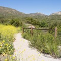 Flowers blooming along the trail.- Horse Thief Loop + Historic Flume Trail