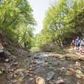 The creek below Rocky Mouth Falls.- Rocky Mouth Falls