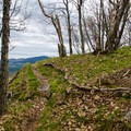 The trail on the ridge has nice views most of the way.- Tongue Mountain Range