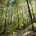 Light filters through the trees in El Corte de Madera Creek Preserve.- El Corte de Madera Creek Preserve
