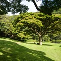 Plenty of open green spaces.- Moanalua Valley Neighborhood Park
