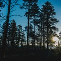 The sun coming through the pines near Sunrise Point.- Sunrise Point