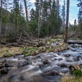 A stream flowing by the Upper Lehman Campground.- Wheeler Peak