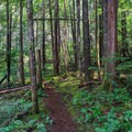 Second-growth forest near the start of the trail.- Stahlman Point