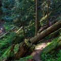 Large downed tree over the trail before crossing the runoff.- Stahlman Point