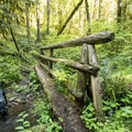 Another of several creek crossings on the South Willamette Trail.- South Willamette Trail Hike