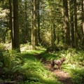 The dog-friendly South Willamette Trail is an inviting place for dogs.- South Willamette Trail Hike