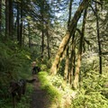 The South Willamette Trail is dog friendly.- South Willamette Trail Hike