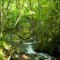 Stream along the trail to Little Bearwallow.- Little Bearwallow Mountain