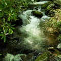 One of many streams along the trail to Little Bearwallow Mountain.- Little Bearwallow Mountain