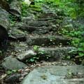Forest foliage.- Little Bearwallow Mountain