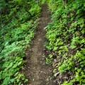 The trail to Little Bearwallow Mountain.- Little Bearwallow Mountain