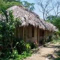 Thatched roof cottages at Clarissa Falls Resort.- Clarissa Falls Resort