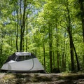 Camping under a sea of spring green.- Elkmont Campground
