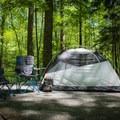 Elkmont Campground.- Elkmont Campground