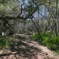 Return through the shady trail, or split off and hike to the top of the ridge afterward.- Reservoir Canyon Falls