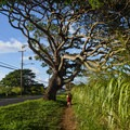 This small town has beautiful open spaces too!- Historic Hale'iwa Town
