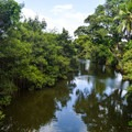 Serenity along the rivers.- Historic Hale'iwa Town