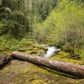 Brice Creek and the scenic Umpqua National Forest.- Evergreen Falls + Blue Hole Falls