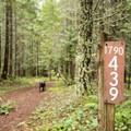 Pinard Falls is dog friendly.- Pinard Falls